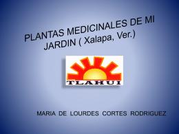 plantas_medicinales_de_mi_jardin_jalapa_ver