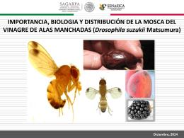 importancia, biologia y distribución de la mosca del
