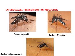 8 dengue y fiebre amarilla