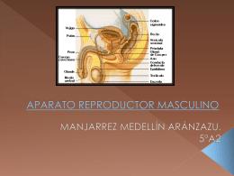 partes del aparato reproductor masculino.