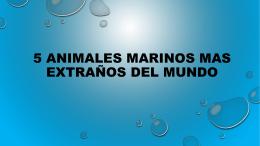 5 animales marinos mas extraños del mundo