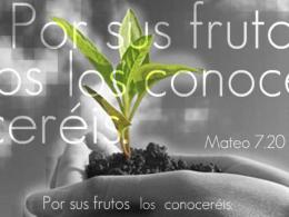 2012-02-19_mateo7.15