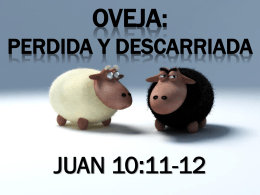 OVEJA: PERDIDA Y DESCARRIADA