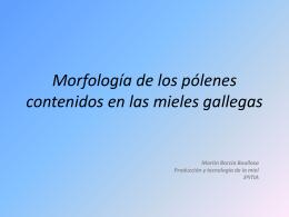 Morfología de los pólenes contenidos en las mieles