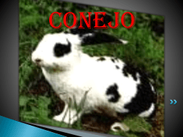 Conejo - WordPress.com