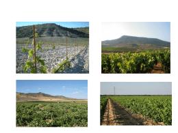 Presentación Agricultura 2