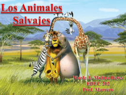 Power Point- Animales Salvajes