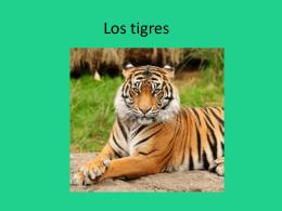 Los tigres - Escuela de los Andes
