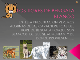 Tigres de Bengala Blanco