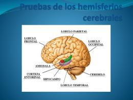 Pruebas de los hemisferios cerebrales