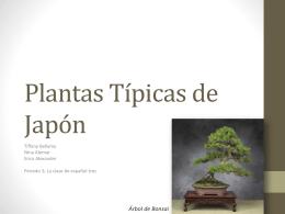 Plantas Típicas de Japón erica nina tiffany