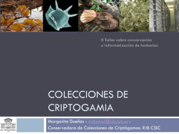 Colecciones de Criptogamia