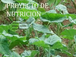 PROYECTODE NUTRICION