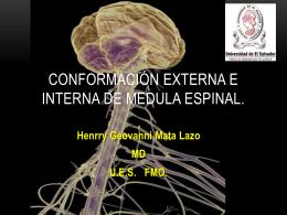6 Conformación interna y externa de medula espinal