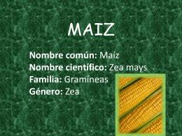 MAIZ - Pastos