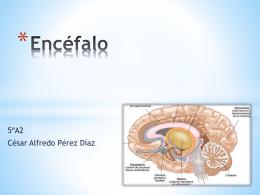 Encéfalo - Anatomía y Fisiología Humana