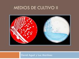 Práctica: Cultivo de bacterias II