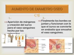 AUMENTO DE DIAMETRO OSEO