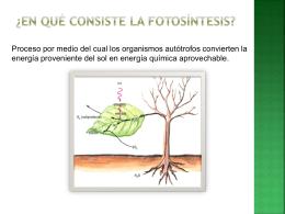 ¿En qué consiste la fotosíntesis?