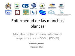 Modelos Enfermedad de las manchas blancas Hm0 Dic 2012