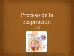 Proceso de la respiración Diego