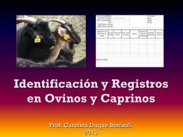 CD - Identificación y Registros