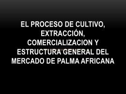 el proceso del cultivo, extracción, comercializacion y