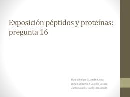 Exposición péptidos y proteínas: pregunta 16