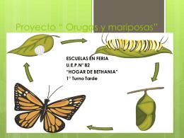 Proyecto-Mariposa-Bethania