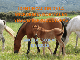 identificacion de la microbiota normal en yeguas reproductoras