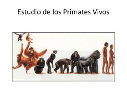 Taxonomía de los primates