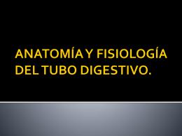 ANATOMÍA Y FISIOLOGÍA DEL TUBO DIGESTIVO.