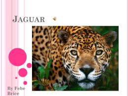 Jaguar - SBAS