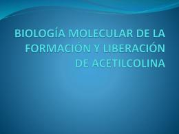 BIOLOGÍA MOLECULAR DE LA FORMACIÓN Y LIBERACIÓN DE