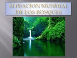 SITUACION MUNDIAL DE LOS BOSQUES