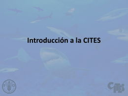 Introduction to Shark Species and Manta Rays