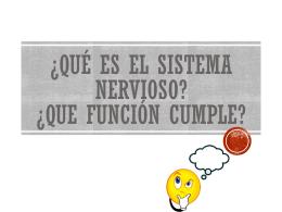 ¿Qué es el sistema nervioso? ¿Que función cumple?