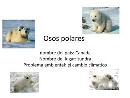 Osos polares - Unicornio con bigote