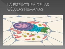 3-La estructura de las células humanas (El trío tralará)