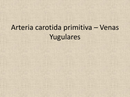 anatomia carotida