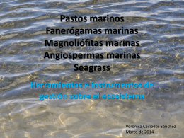 Pastos Marinos - WordPress.com