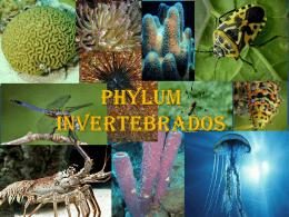 PHYLUM INVERTEBRADOS Presentacion