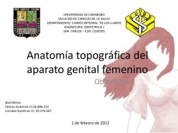Anatomía topográfica del aparato genital femenino