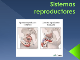 Sistema Reproductor Femenino. -Ovarios. -Trompas