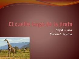 El cuello largo de la jirafa