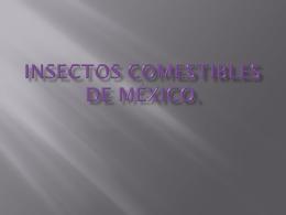 Insectos comestibles de México. Los hemípteros