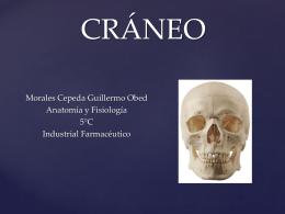 CRÁNEO - Anatomía y Fisiología Humana