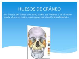 HUESOS DE CRÁNEO