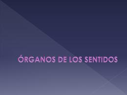 Tema 18 Organos de los sentidos