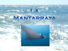 Mantarraya - WordPress.com